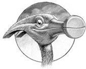 drawing of bird with a hammer for its beak
