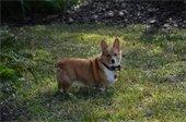 small dog looking at the camera