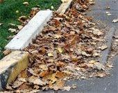 Leaf clogged storm drain