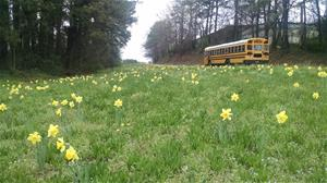 KACCB MLK Project Daffodils Are Blooming!