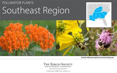 jpg of pollinator plants for se region header