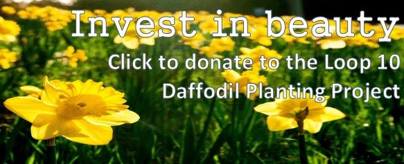 click to donate to the loop 10 daffodil planting project 2018