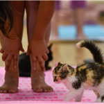 051518 MemP Kitty Yoga-27-X2