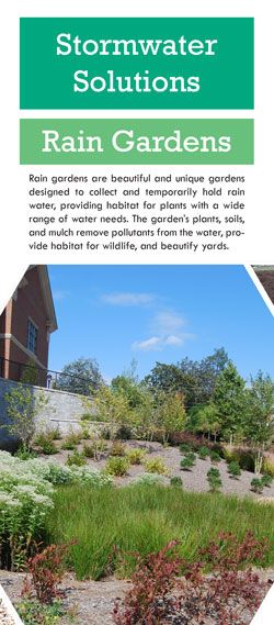 Stormwater Solutions - Rain Gardens thumbnail