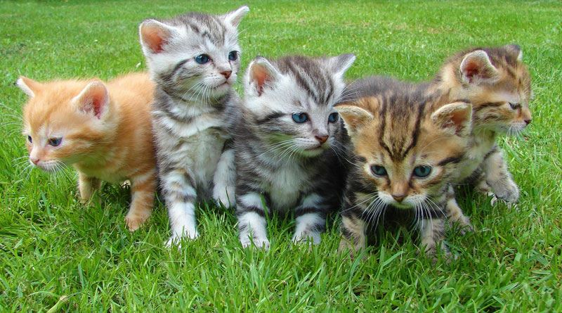 Four cute kittens in a row playing in the grass