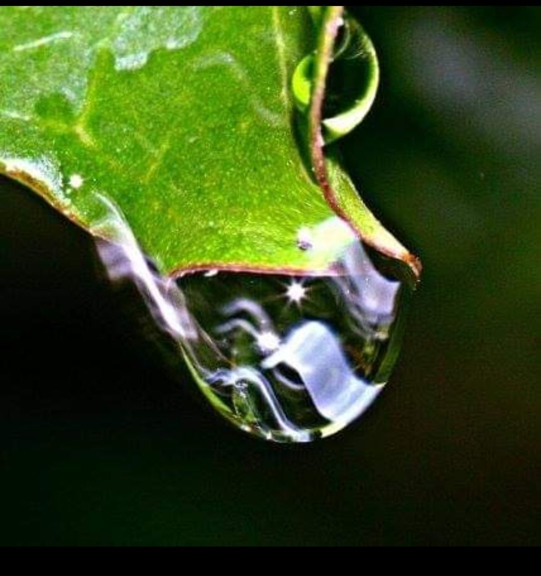 A close up of a drop of water on the tip of a leaf.