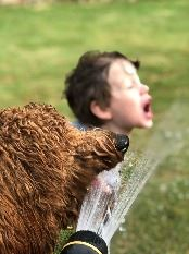 Dog and boy drink from hose
