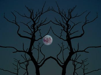 full moon scary night.jpg