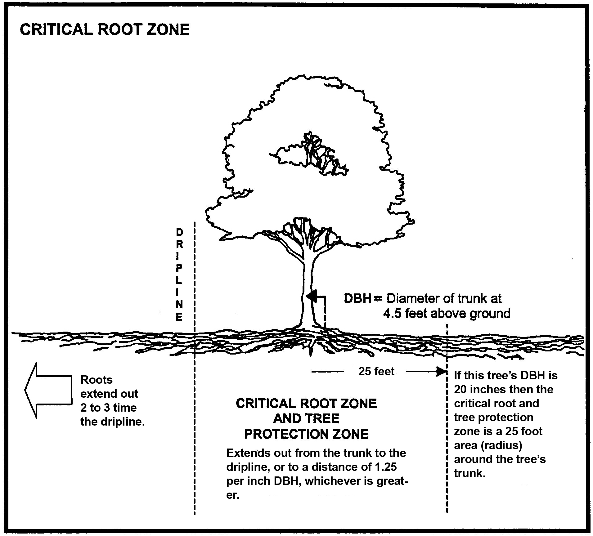 Critical Root Zone.jpg